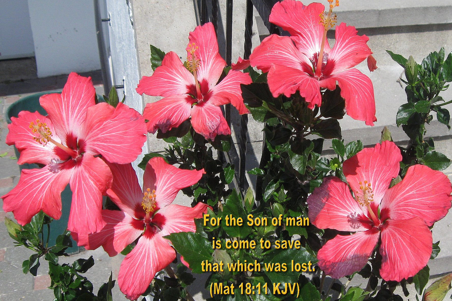 Inspirational Wallpapers Bible Verses Flowers Ii Hot Discussions