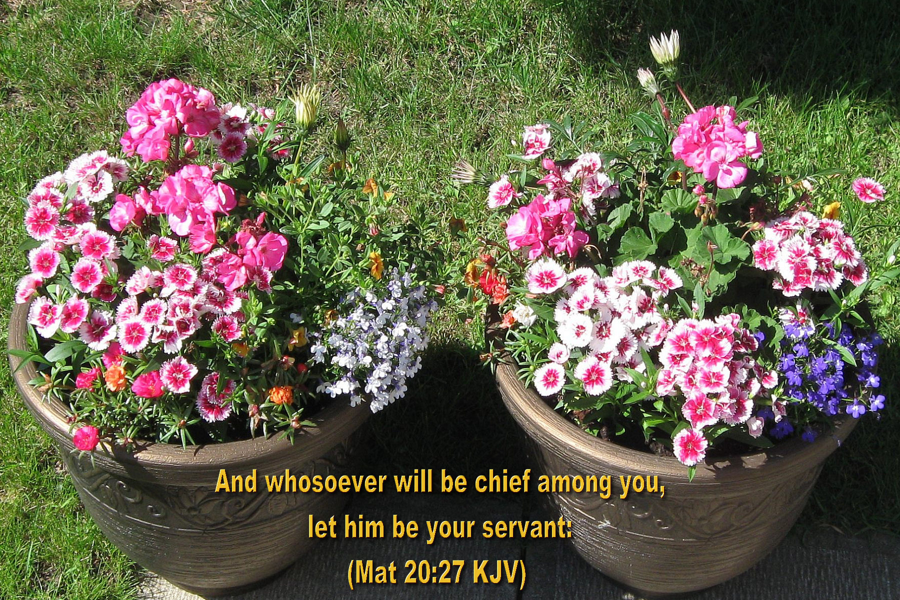 Inspirational WALLPAPERS BIBLE VERSES Flowers II