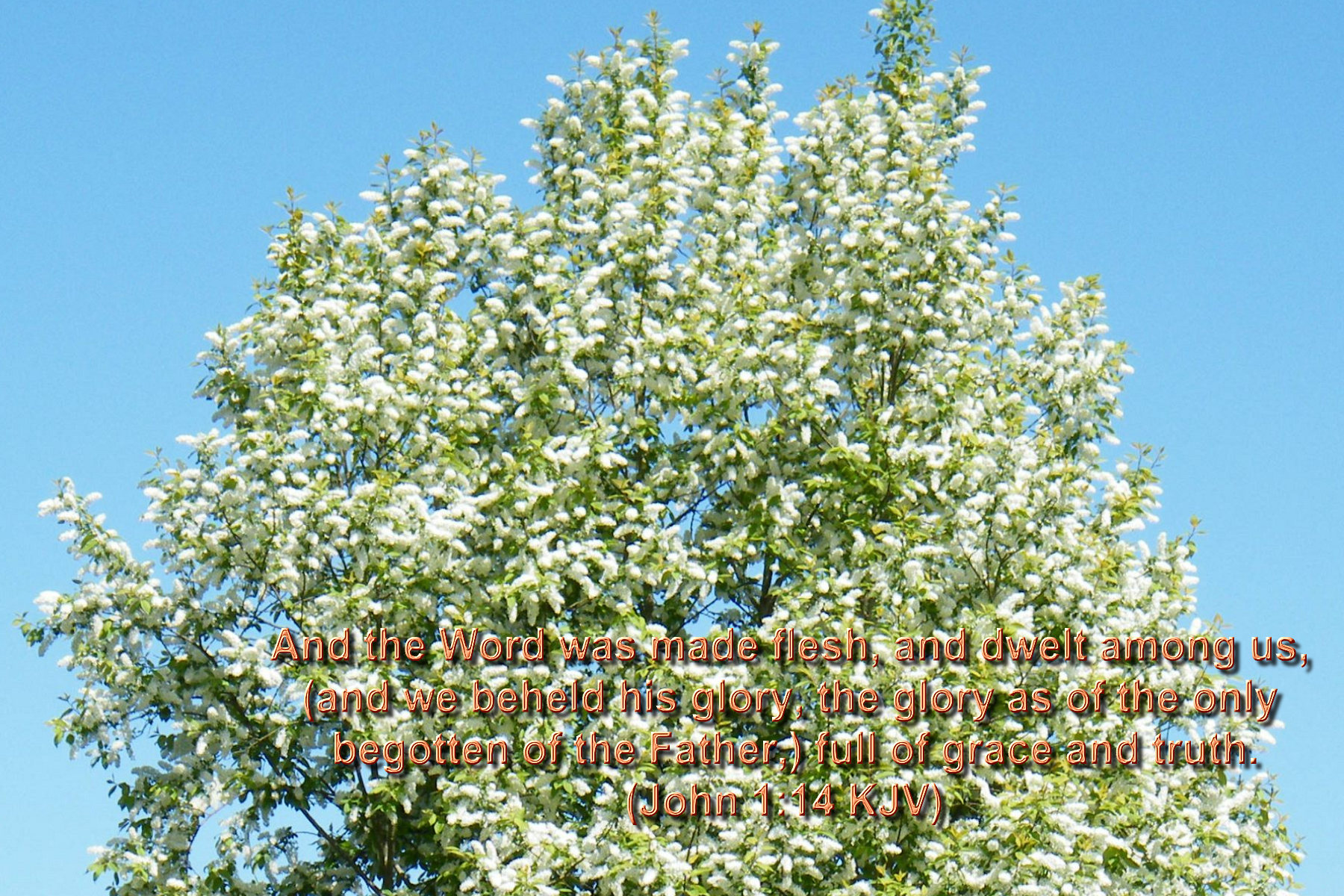 spring wallpaper with bible - photo #48