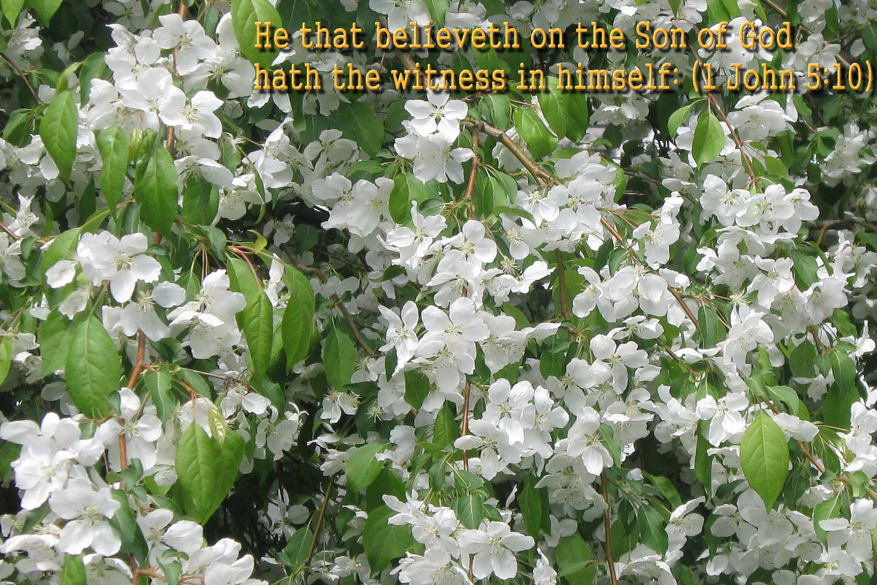 spring wallpaper with bible - photo #45