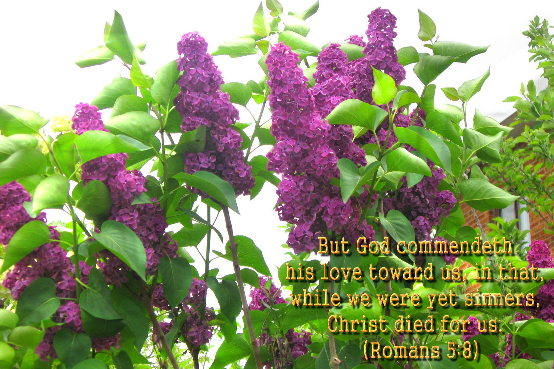 spring wallpaper with bible - photo #18