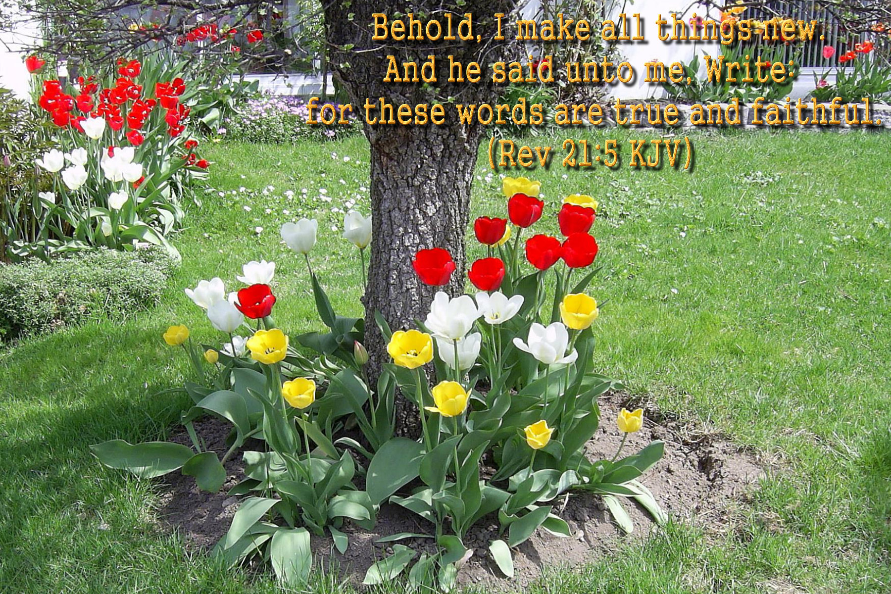 spring wallpaper with bible - photo #2