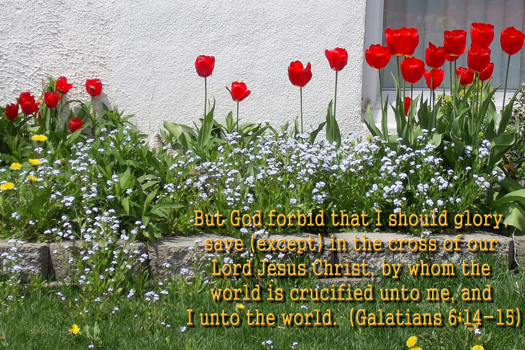 spring wallpaper with bible - photo #41
