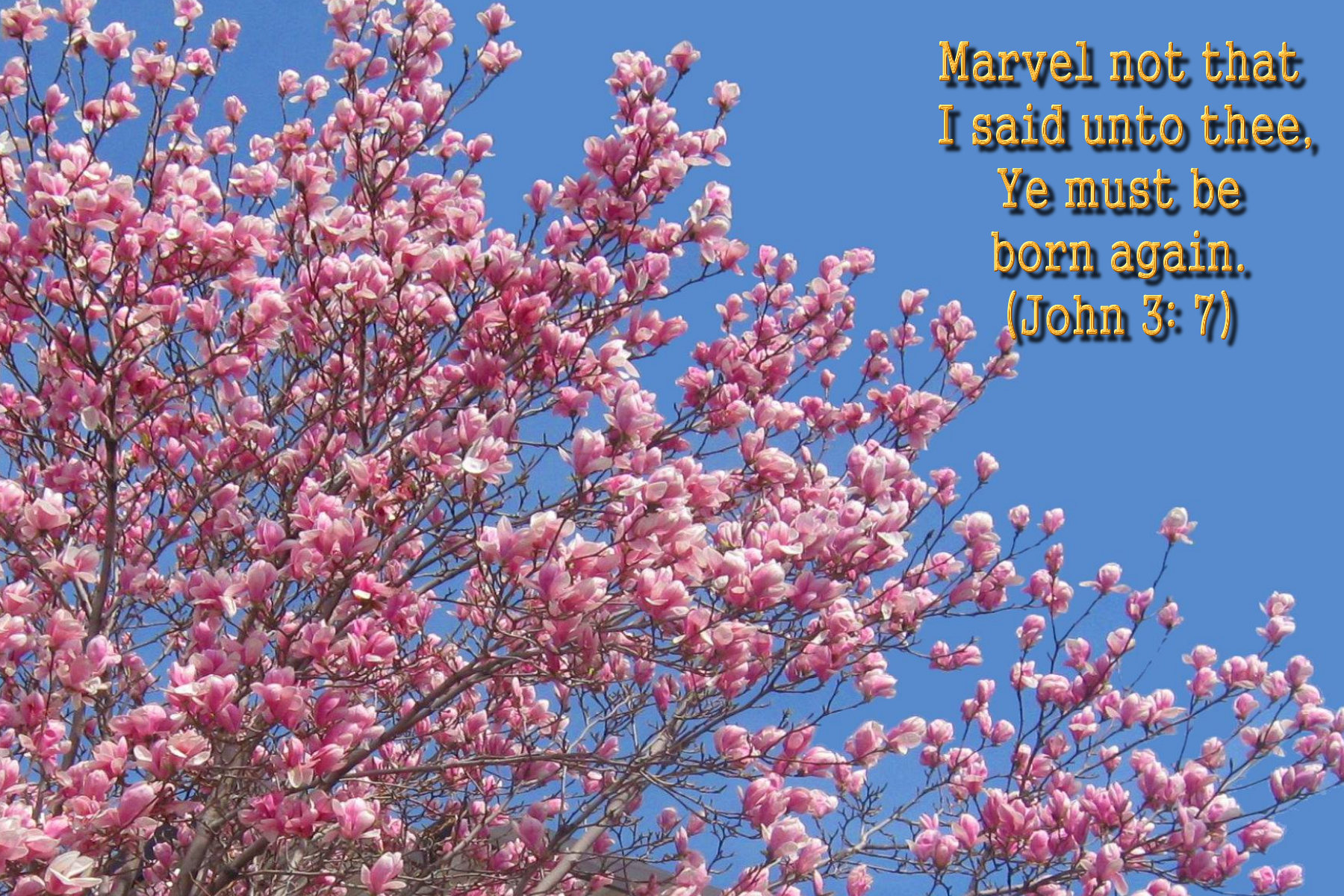 spring wallpaper with bible - photo #5