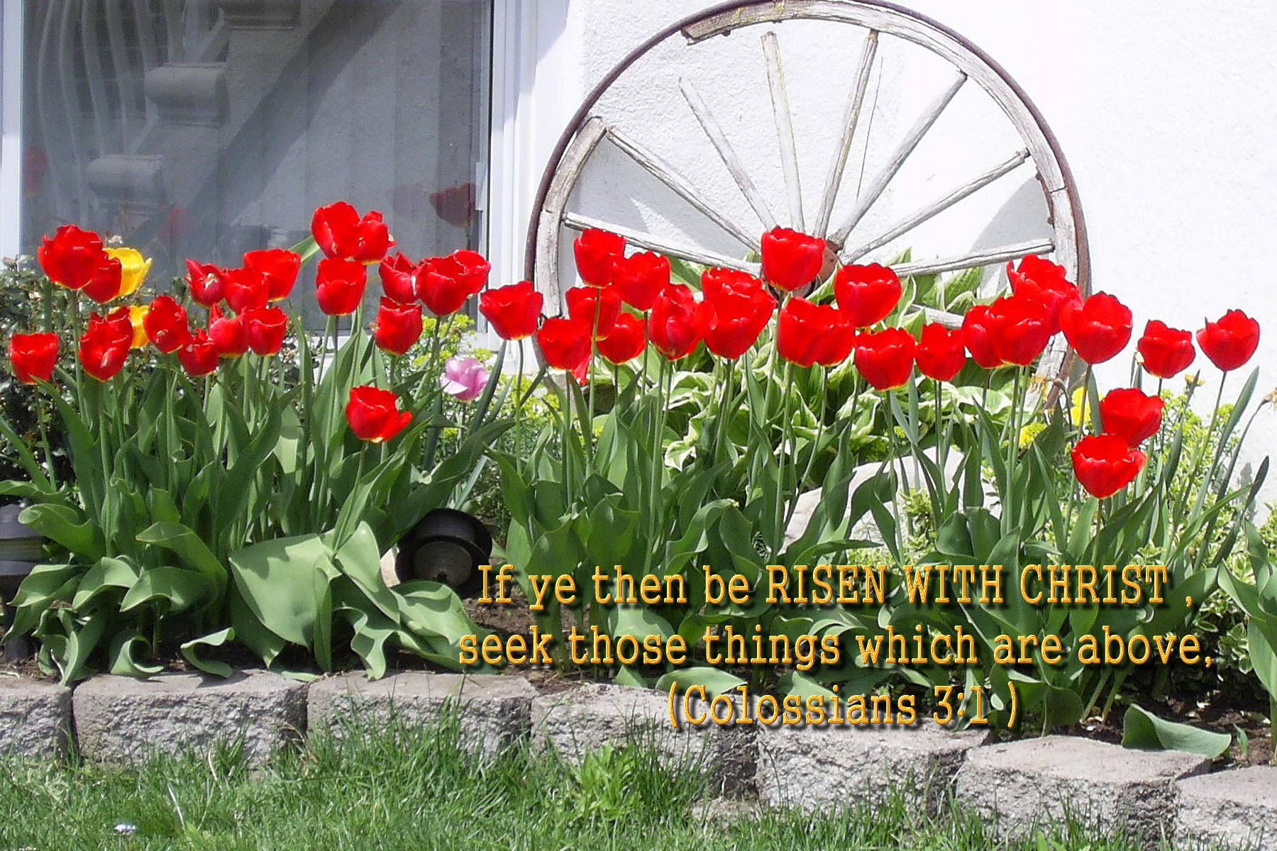 Scenery & Spring Pictures: Spring Pictures With Bible Verses
