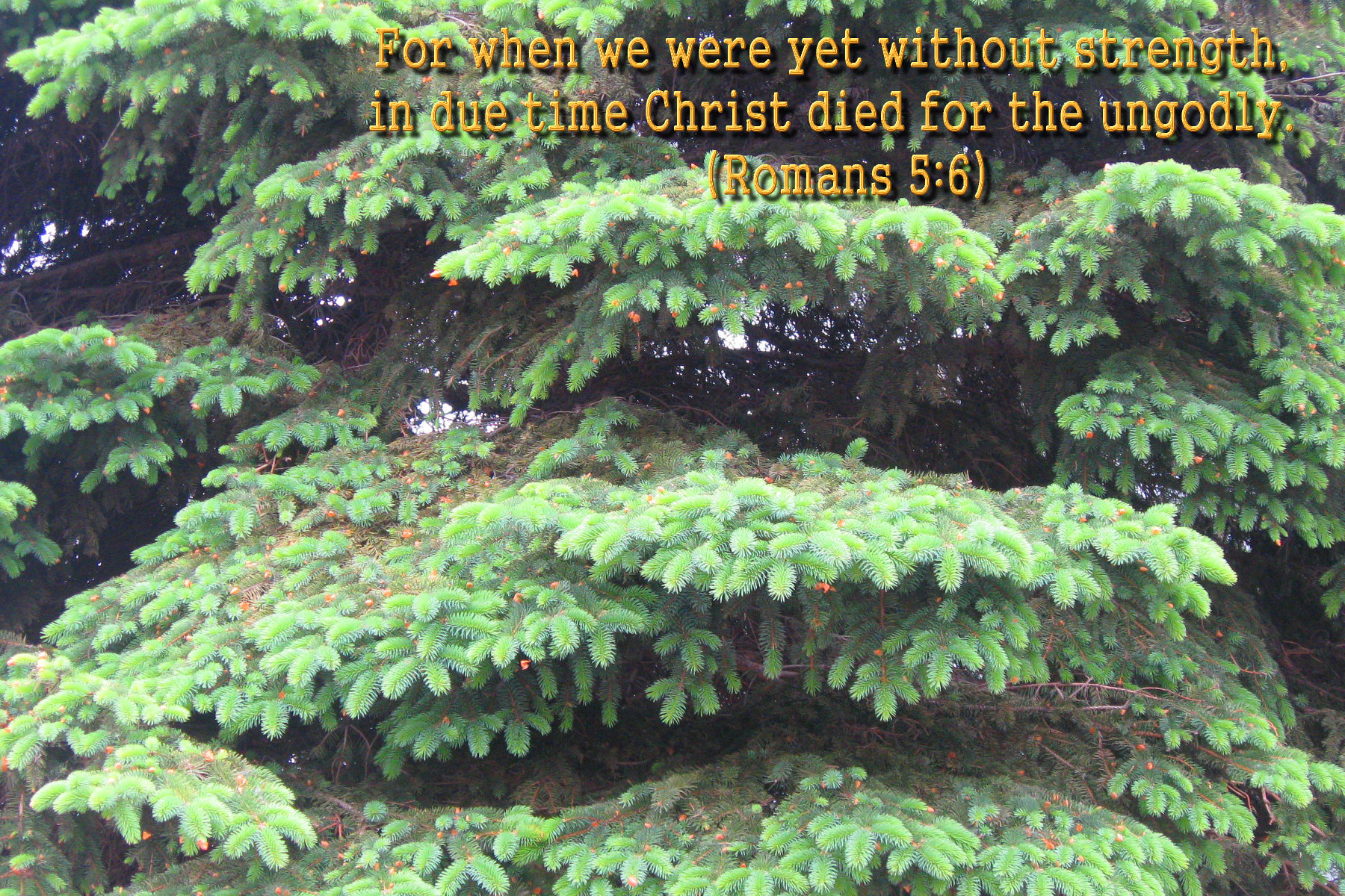 spring wallpaper with bible - photo #49