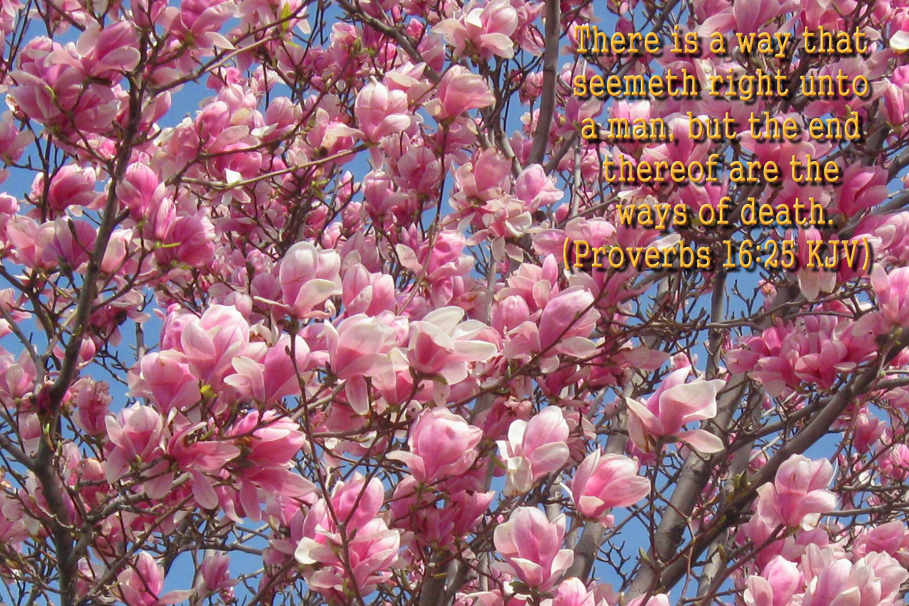 spring wallpaper with bible - photo #12