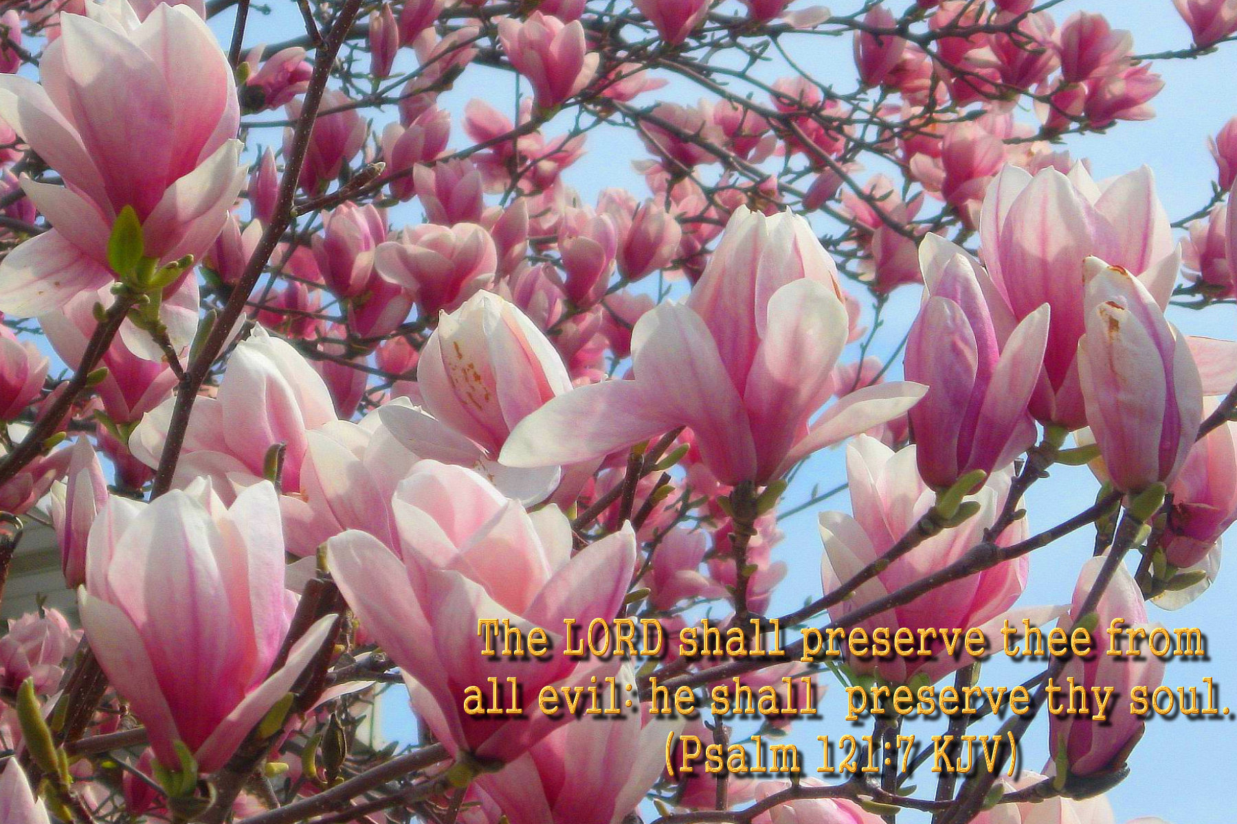 spring wallpaper with bible - photo #1