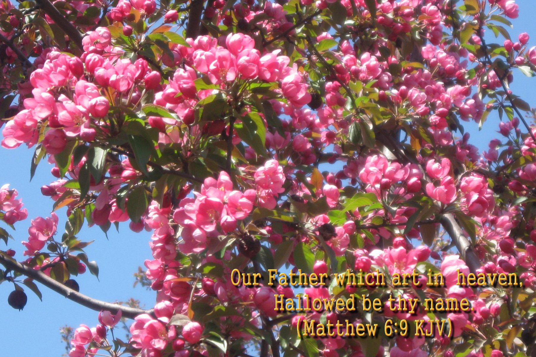 spring wallpaper with bible - photo #3