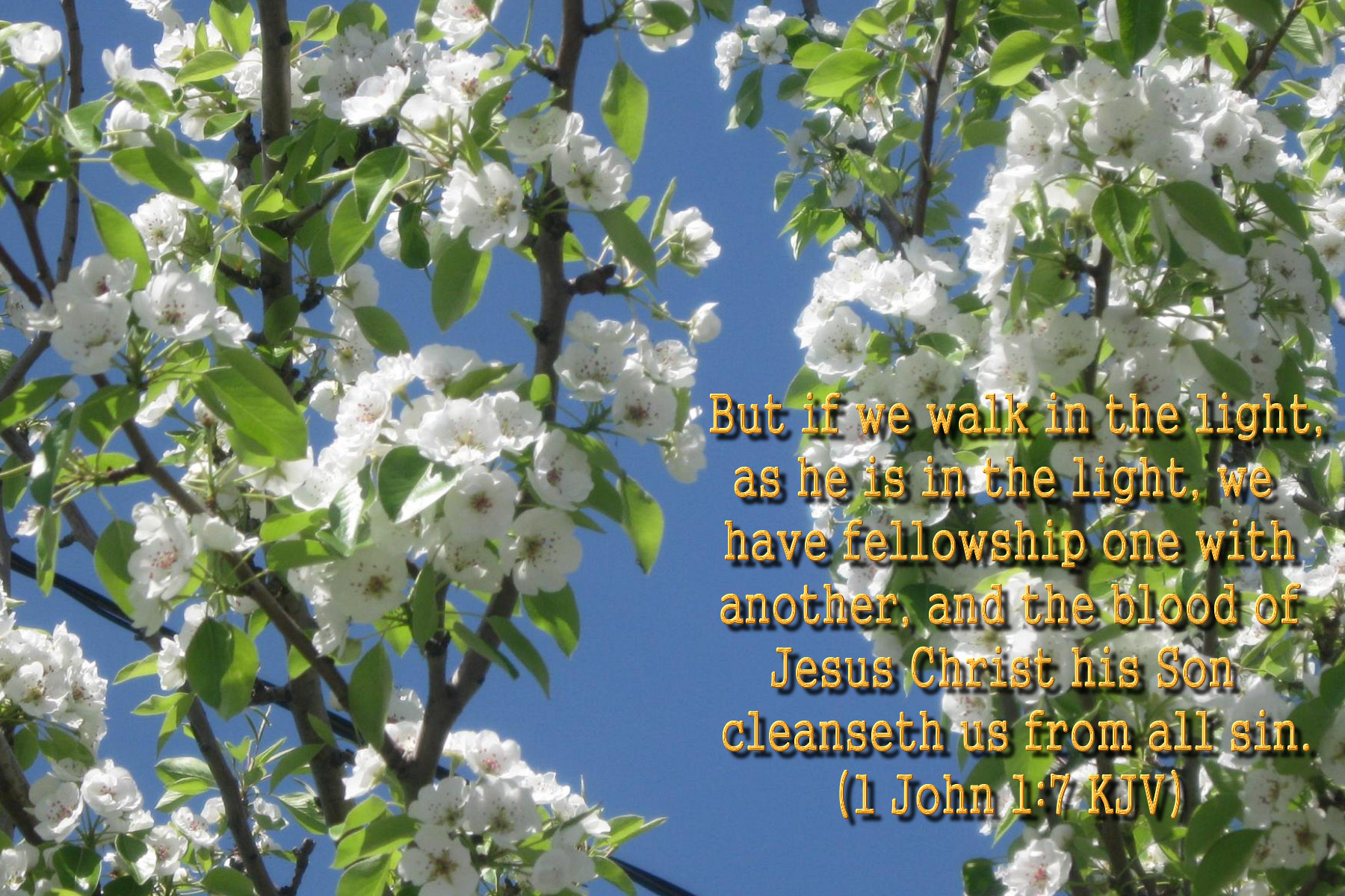 spring wallpaper with bible - photo #11