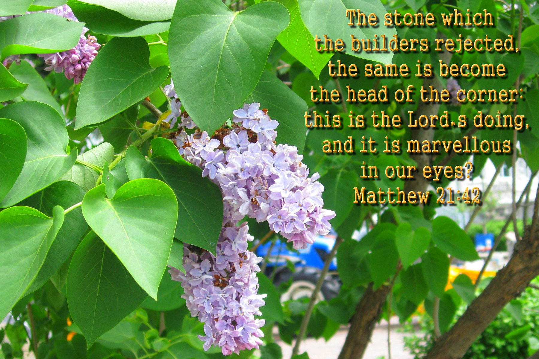 spring wallpaper with bible - photo #13
