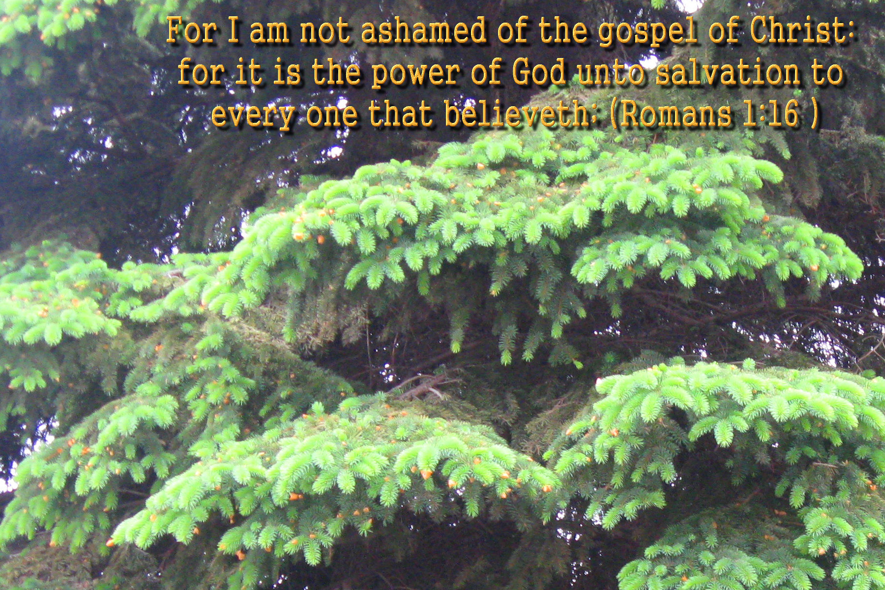 spring wallpaper with bible - photo #30