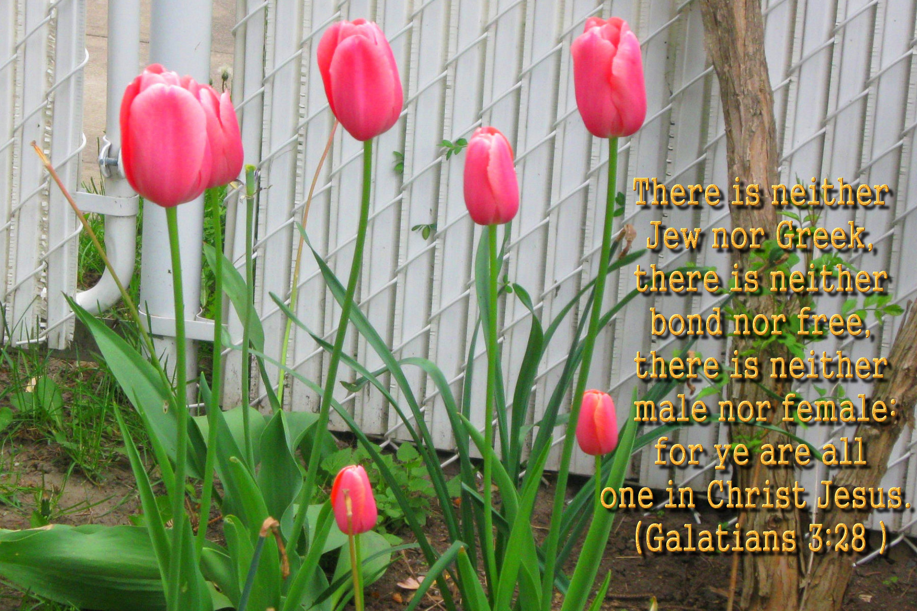 Bible Verses Spring Large Wallpapers Hot Discussions