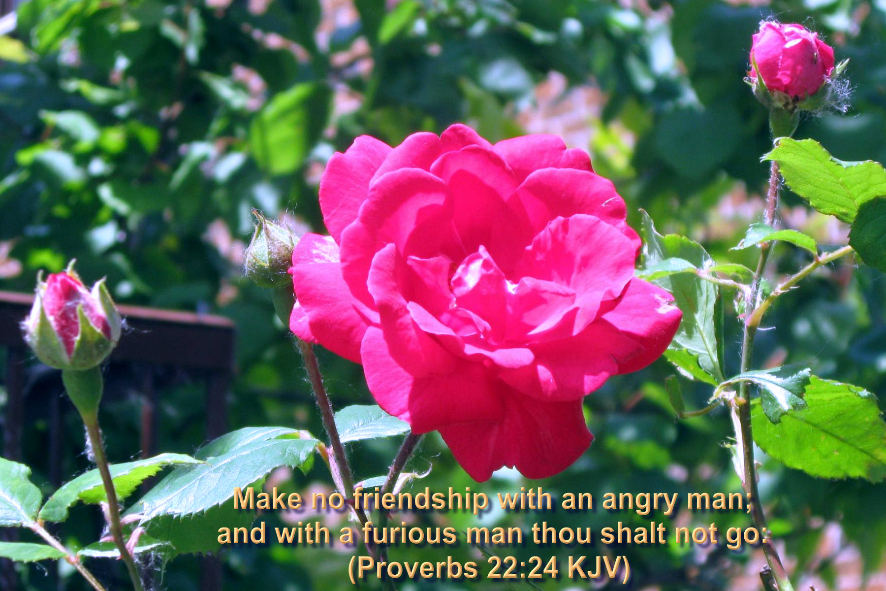 Roses Bible Verses Wallpaper Hot Discussions