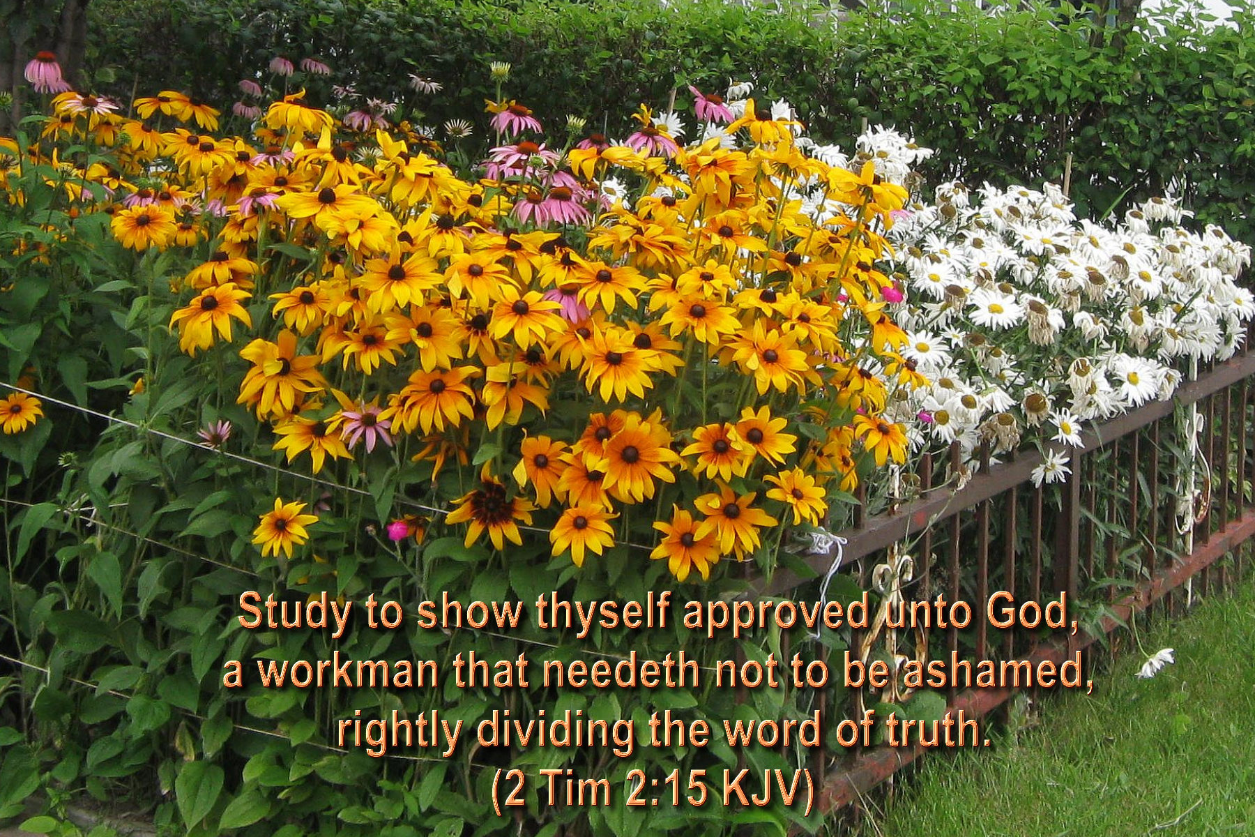spring wallpaper with bible - photo #20