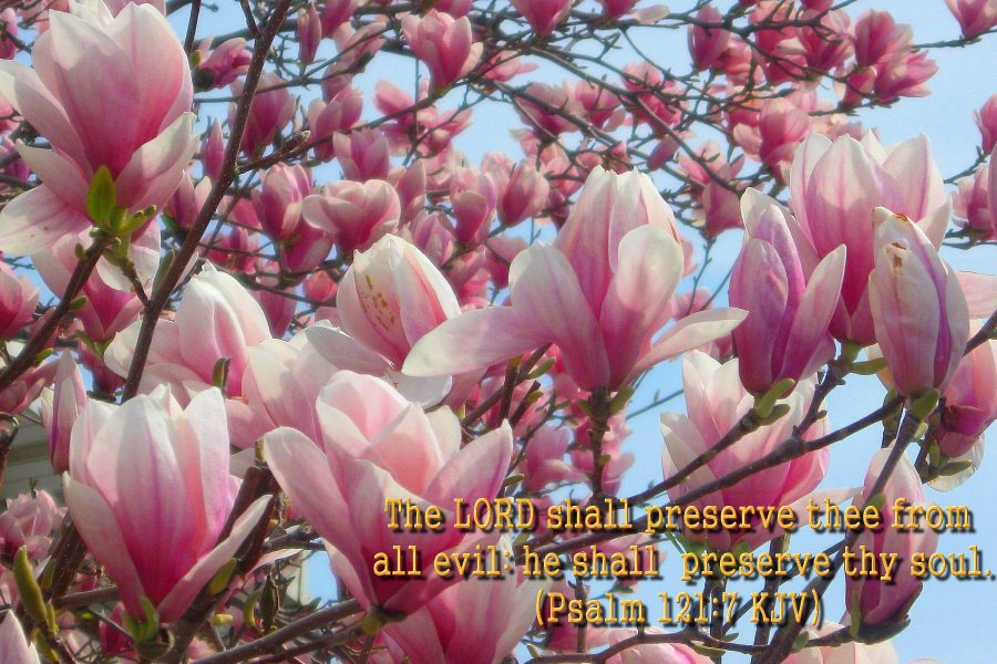 flower blossom wallpaper scripture - photo #7