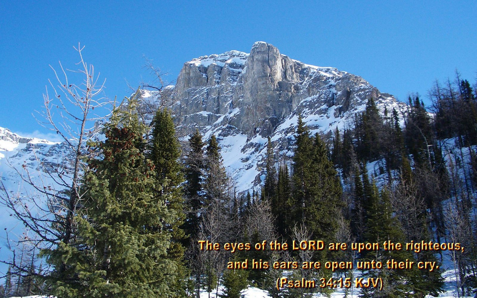 scenic wallpapers bible - photo #27