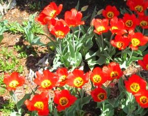 spring flowers  (11)