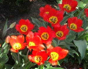 spring flowers  (12)