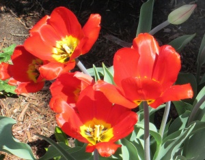 spring flowers  (13)