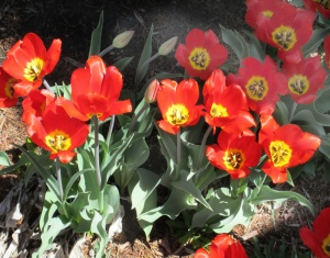 spring flowers  (14)
