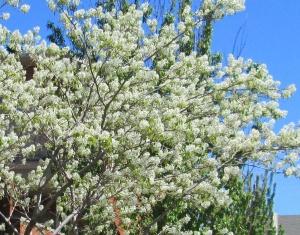 spring flowers  (17)