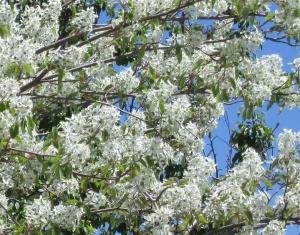 spring flowers  (18)