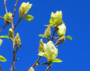 spring flowers  (19)