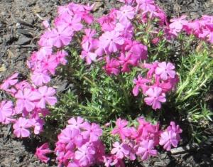 spring flowers  (23)