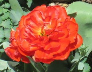 spring flowers  (24)