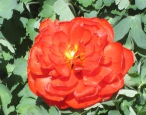 spring flowers  (25)