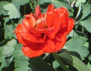 spring flowers  (26)