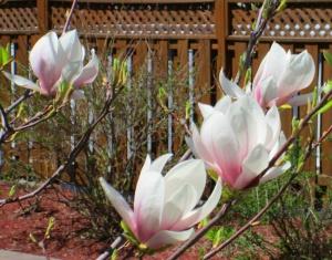 spring flowers  (29)