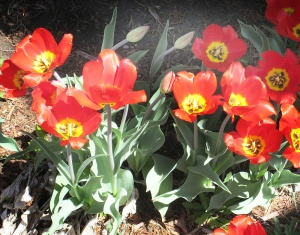 spring flowers  (3)