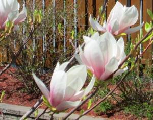 spring flowers  (30)