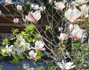 spring flowers  (32)