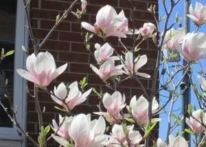 spring flowers  (34)