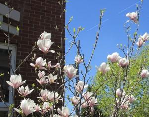 spring flowers  (35)