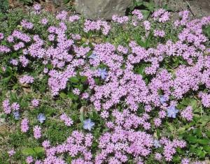 spring flowers  (36)