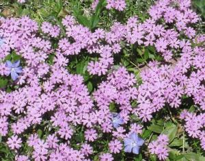 spring flowers  (37)
