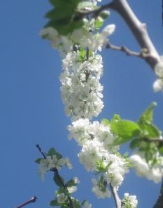 spring flowers  (40)
