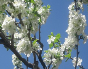 spring flowers  (41)