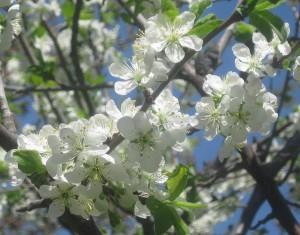 spring flowers  (42)