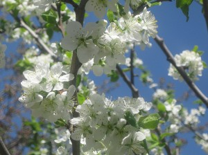 spring flowers  (43)