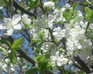 spring flowers  (44)