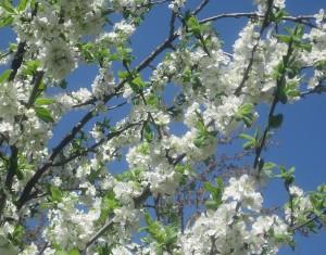spring flowers  (45)