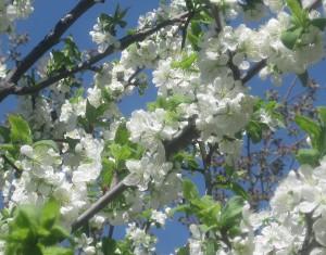 spring flowers  (46)