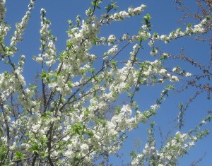 spring flowers  (47)