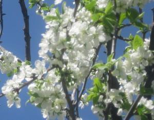 spring flowers  (48)