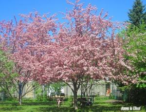 spring flowers  (49)